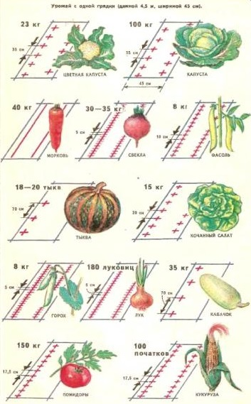Схема посадки овощей