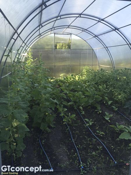 Также можно сеять семена альстромерии непосредственно в почву.
